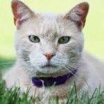 Вітафел для кішок