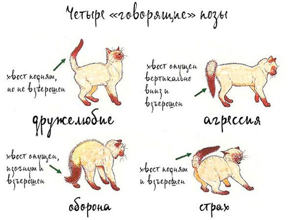 правила в`язки кішок
