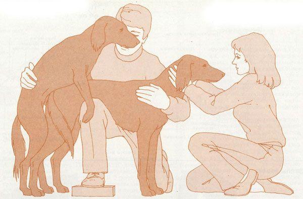 правила в`язки собак