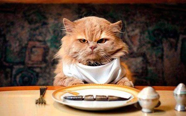 Смачно і корисно: чим потрібно годувати кота