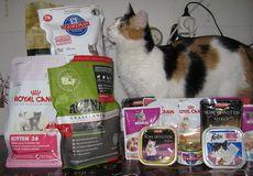 Який корм для вашої кішки краще: сухий або вологий?