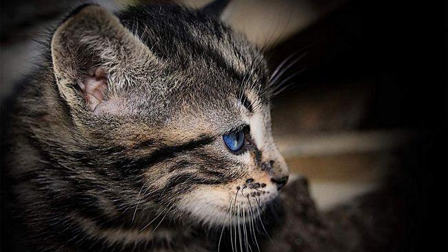 У владивостоці кошеня, який потрапив під машину, рятували евакуатором