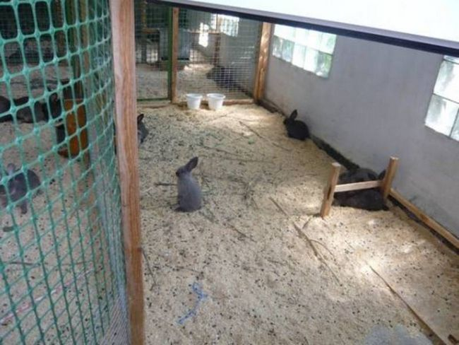 Вольєрне утримання кроликів