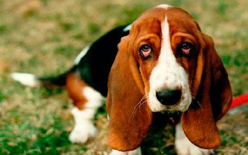 панкреатит у собаки