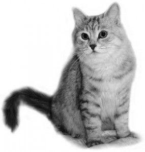 Виховання британських кішок. Продовження.