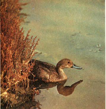 Фото 5 Захист мисливської фауни