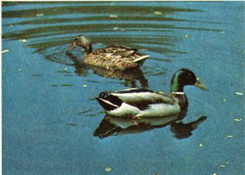 Фото 4 Захист мисливської фауни