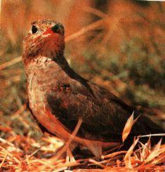Фото 2 Захист мисливської фауни