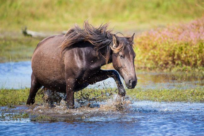 Все, що ви хотіли знати про розведення коней