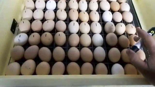 Намічені маркером яйця