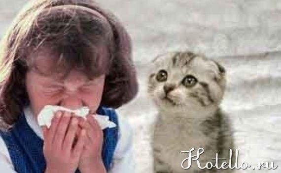 Алергію не викликає шерсть вихованця. Всі справи в виділяються гормони вихованця