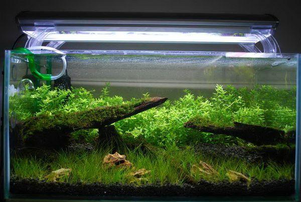Все важливе про висвітлення акваріума