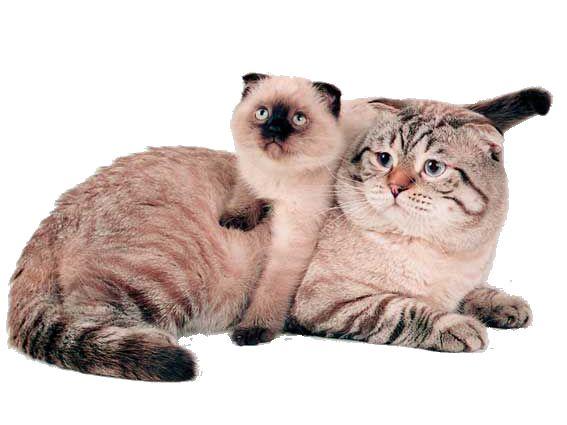 Друга кішка в будинку