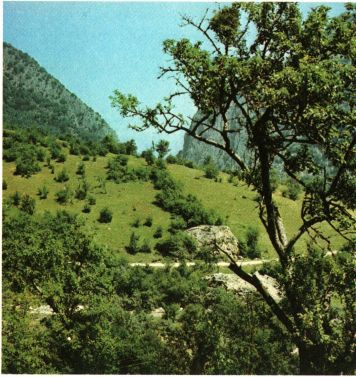 Фото 3 Захист мисливської фауни