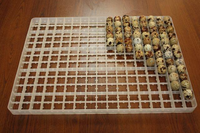 Пластиковий лоток з перепелиними яйцями
