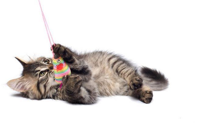 Вибираємо іграшку для кішки