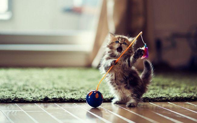 Чим краще грати кішці