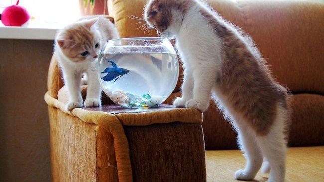 Як зацікавити кішку іграшкою
