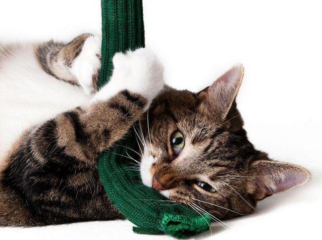 Іграшка для Вашої кішки