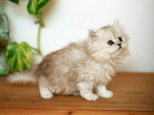 вибір кішки