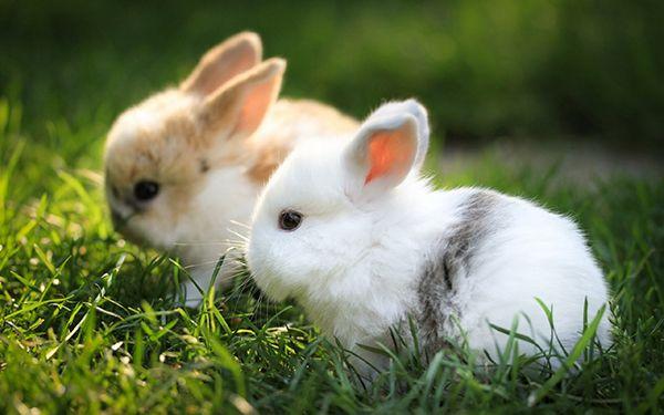 Два крольчонка на траві