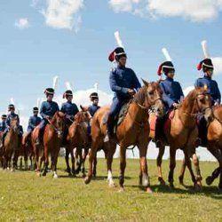 Використання донських коней