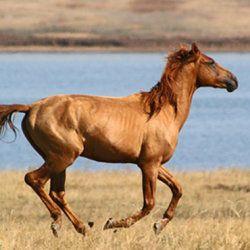 Донський кінь мчить в поле