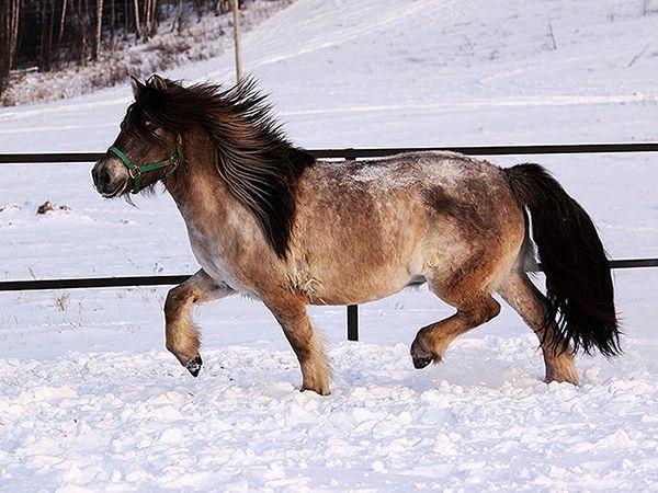 Вирощування і розведення коней на м`ясо