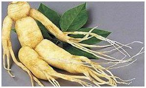Вирощування елеутерококу з насіння: фото