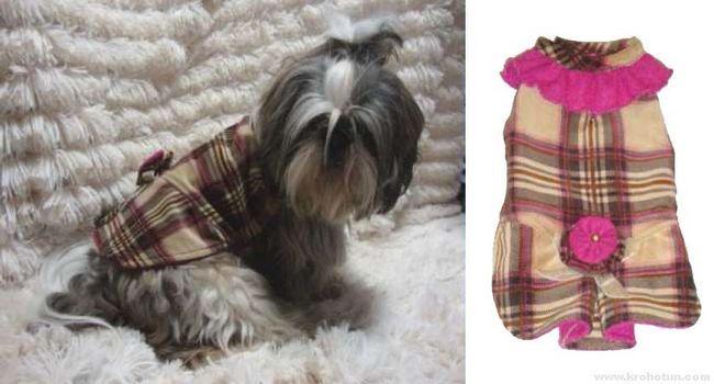 Висока мода для собак маленьких порід