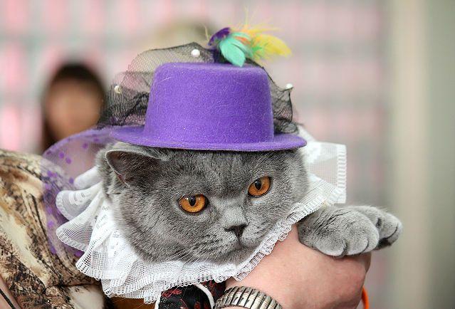 Виставка кішок в марте21 березня відбулася чергова виставка кішок, на якій брали участь і мої британські кішки. Не тільки брали участь, а й отримували нагороди за багатьма номінаціями! Виставка проходила в урочистій і святковій атмосфері, конкурси проводя