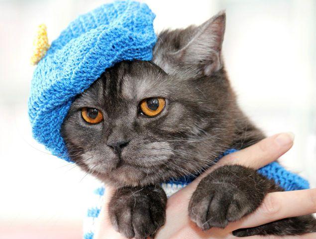 Переможці виставки кішок