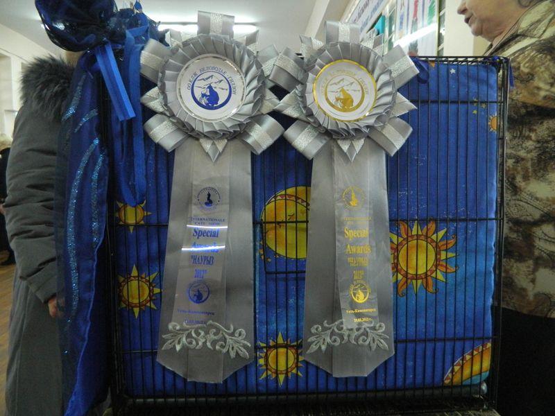 Нагороди на виставці кішок