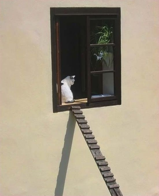 кішки - знаменитості