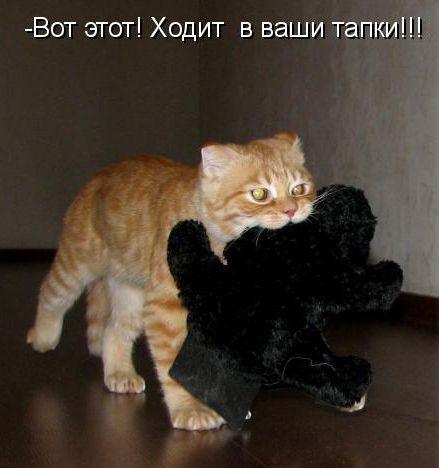 Забавні коти і кішки