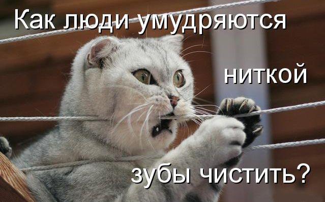 коти кумедні