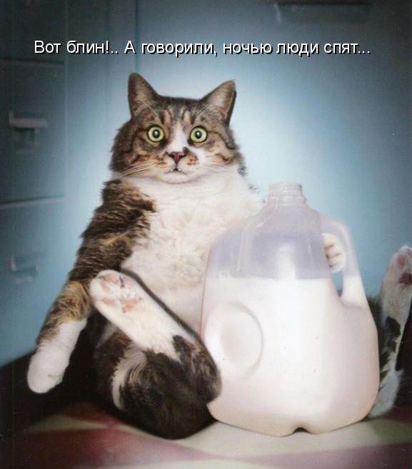 Забавні кішки і коти