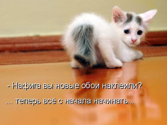 кішки кумедні