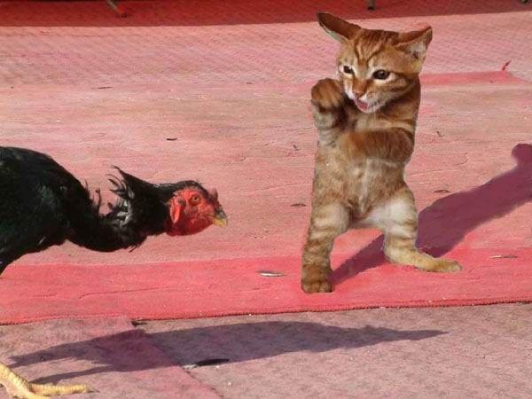 Велика добірка смішних котів (95 фото)