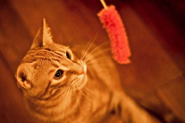 Пристосування для гри з кішкою.