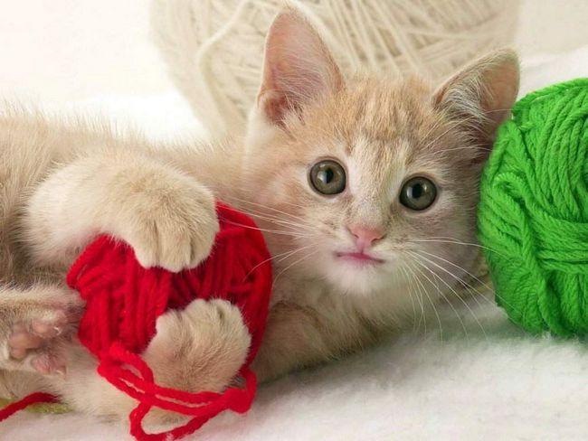 Клубочки для кішки.