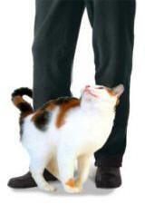Навіщо кішка залишає мітки?