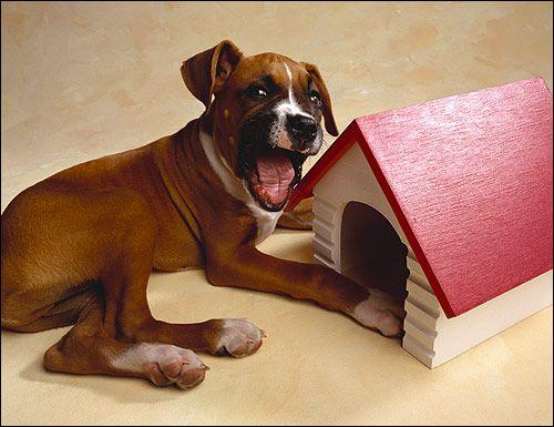 Заковтування собакою сторонніх об`єктів