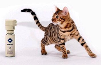 Загородження для кішки