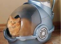 закритий туалет для кішок
