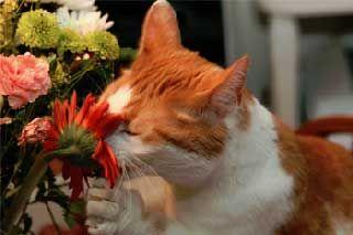 Запахи, що відлякують кішок.