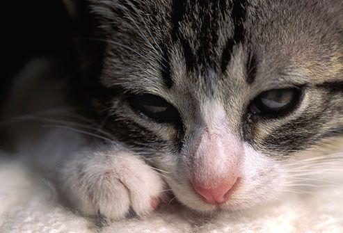 Котик страждає від болю