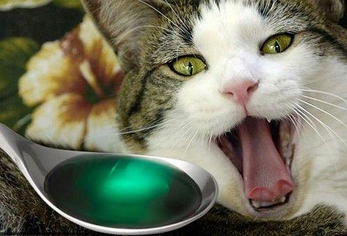 Кот приймає ліки