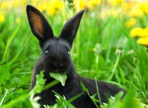 Заборонена їжа для кроликів: вчимося правильно годувати вуханів