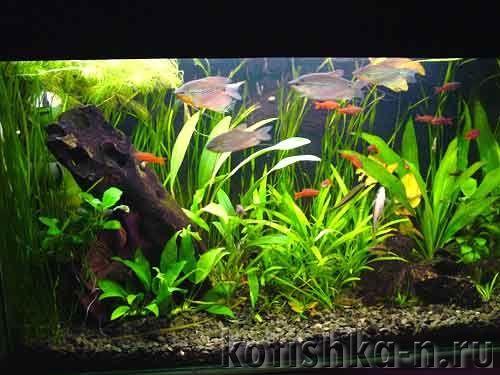 Запуск акваріума, бути чи не бути. Які помилки роблять недосвідчені акваріумісти?